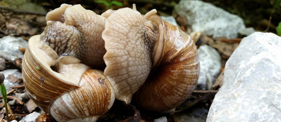 snails-1638170_940x410